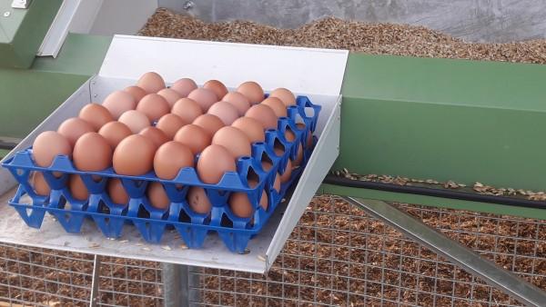 Kunststoff-Höcker blau für 30 S Eier 10 Stück