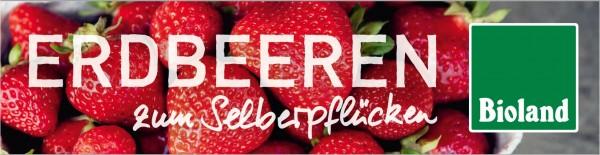 """Banner-Erdbeeren """"zum Selberpflücken"""""""
