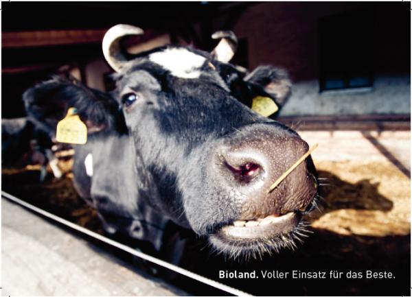 "Postkarten Tierwohl ""Kuh"""