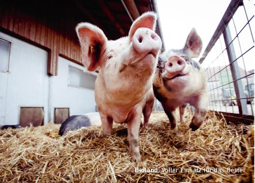 """Postkarten Tierwohl """"Schweine"""""""